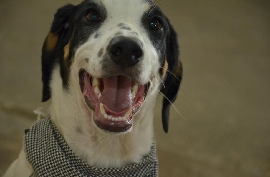Cachorro (Adeildo Silva/Prefeitura de Betim/Divulgação)
