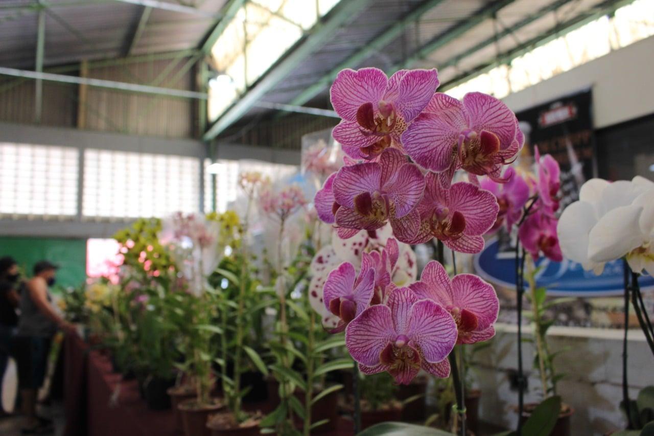 Mostra de Orquídeas no Mercado Central de Betim Foto PMB