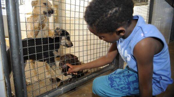Criança brinca com filhotes de cachorro